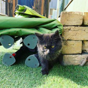 Mabooクライミングジムの看板猫